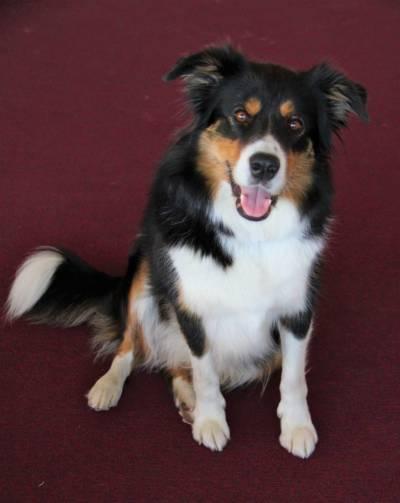 Schulhund Remy (3)